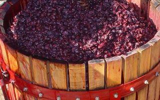 Брага из винограда